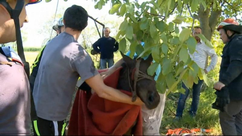 Rumunia akcja ratunkowa konia