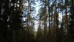 W lesie 024.jpg