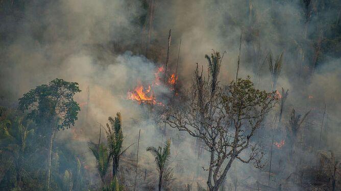 """Amazonia coraz bliżej stania się sawanną. Ten moment """"nadchodzi szybciej, niż sądziliśmy"""""""