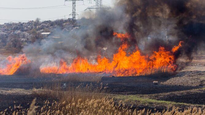 """Ponad 1500 pożarów w Wielką Sobotę, są zabici. """"Katastrofalna"""" sytuacja w lasach"""