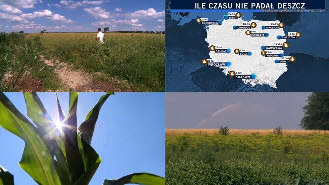 """29 dni bez deszczu we Włodawie, źle jest też na północy. """"Nie pada, a jak pada, to takie drobne coś"""""""