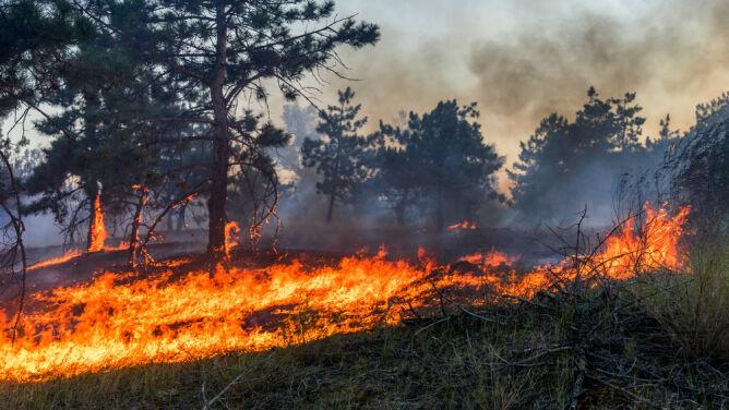 800 pożarów w dwa tygodnie. <br />Zagrożenie w wielu regionach Polski