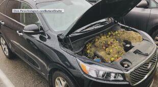 Orzechy w samochodzie